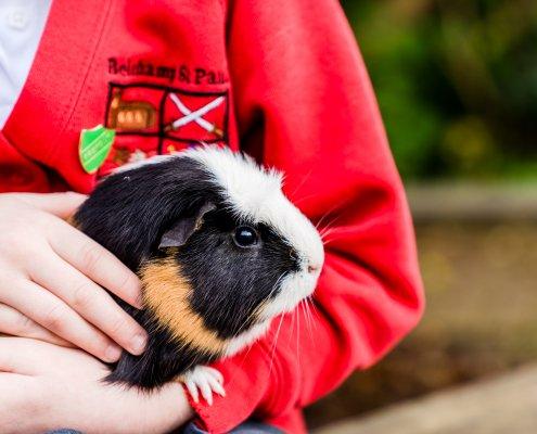 Animal Encounters - Guinea Pigs