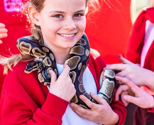 Animal Encounters - snake